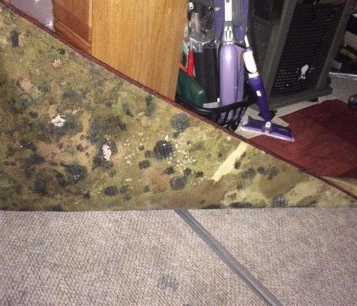 Microbial Growth on Carpet