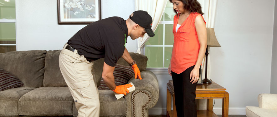 Lynnwood, WA carpet upholstery cleaning